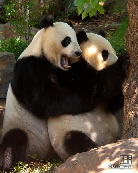 Wang Wang and Funi together