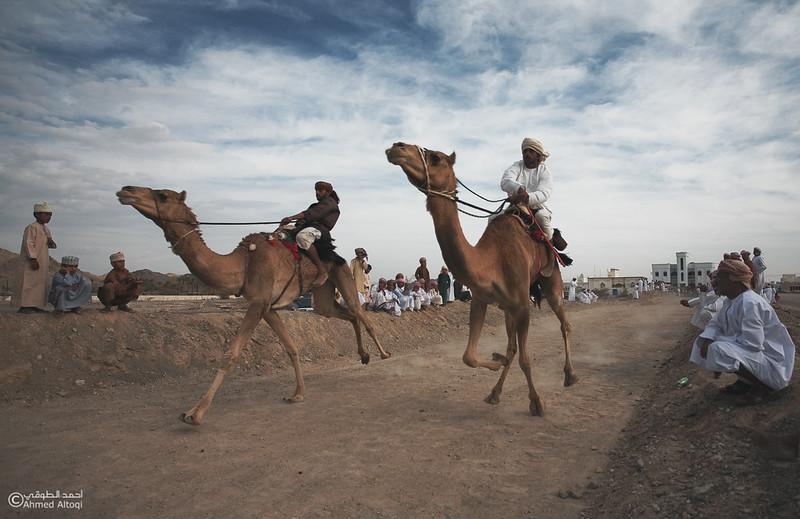 Camel Race  (56).jpg