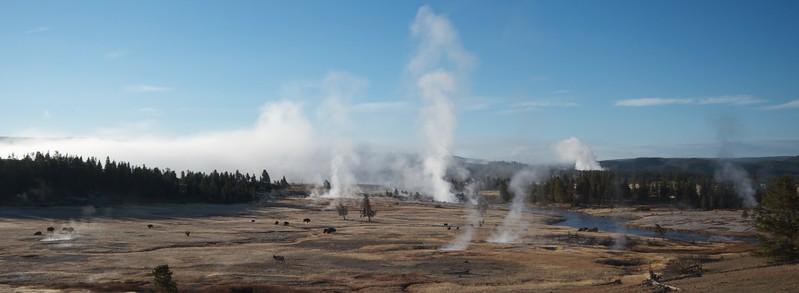 Lower Geyser Basin and Bison Yellowstone N.P. WY IMG_0069363.jpg