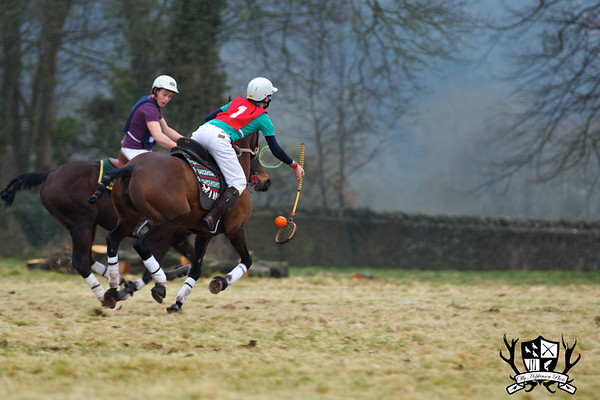 Point To Point & Polocrosse