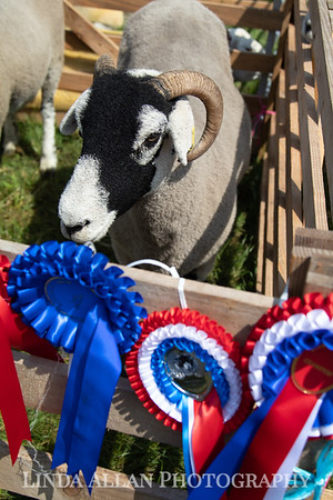 Ryedale Show 2019