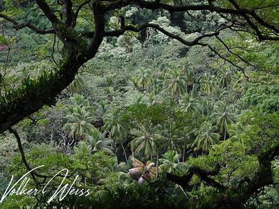 Pipiwai Trail at Oheo Gulch aka Seven Sacred Pools