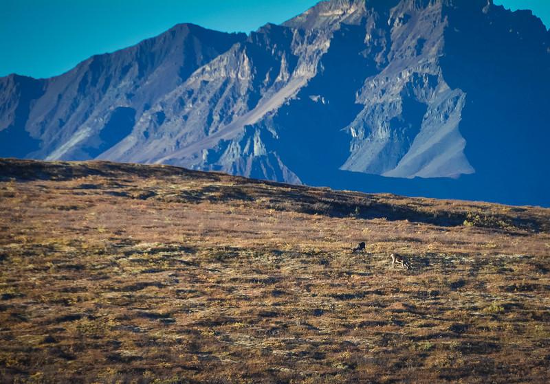 Denali-National-Park-66.jpg