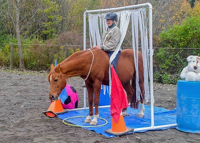 Horse Agility is More Than Obstacles