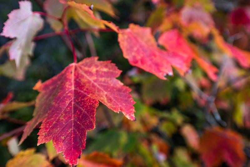 fall at Balancing Rock Trail, Tiverton