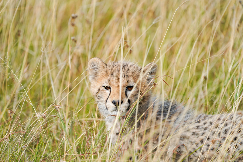 safari-2018-150.jpg