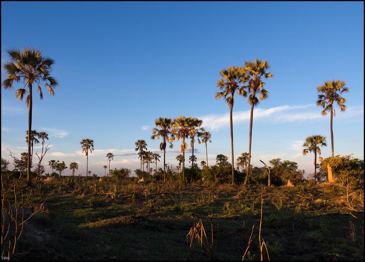 Dusk, Chief's Island, Okovango Delta