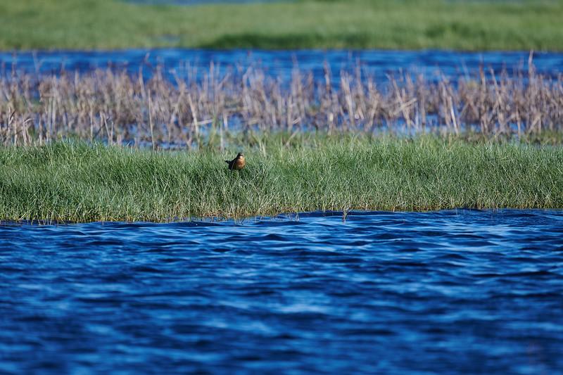 20181103 - Brazoria Wildlife Refuge-85B_4076.jpg