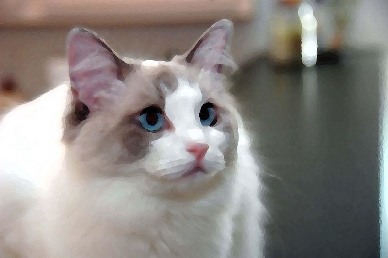 Kitty%20for%20printLr.jpg