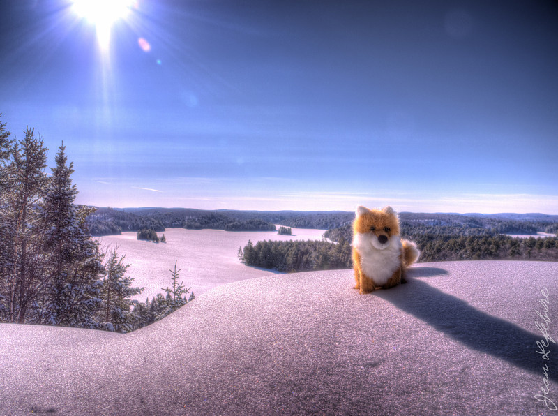 """In Algonquin Park (Ontario, Canada) on the """"Track & Tower Trail"""" up by were the fire tower used to stand. Foxicle (the club's winter mascot) is enjoying the view of Cache Lake below!"""