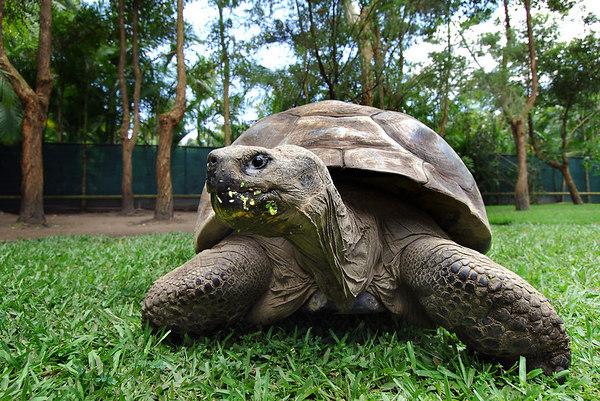 Harriet the Tortoise turns 175