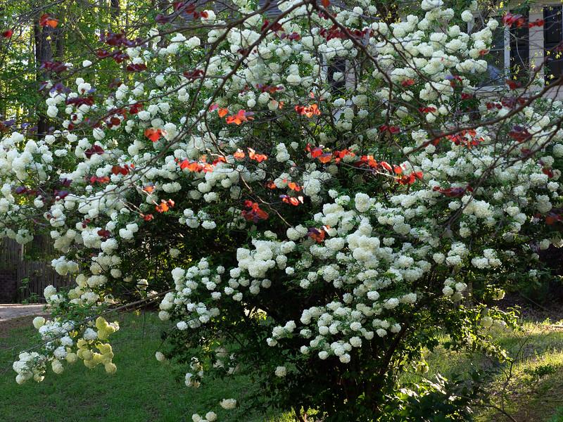 Garden_apr16-4170070.jpg