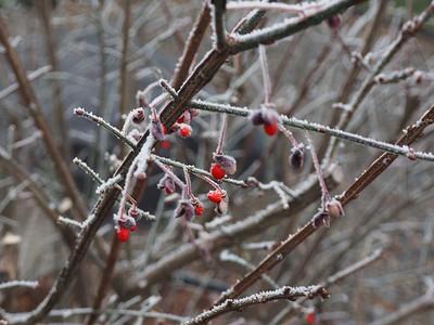 Frosty Morning, 11-15