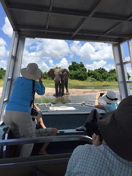 Elephant encounter on the Chobe River - Kristin Appelget