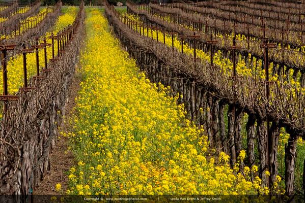 Napa Wine Country