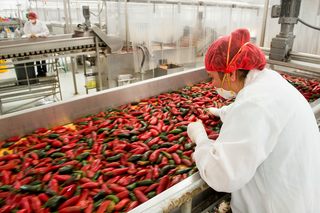 . Workers sort through chilies during the washing process at Huy Fong Foods in Irwindale on Friday, August 22, 2014. (Photo by Watchara Phomicinda/ Pasadena Star-News)