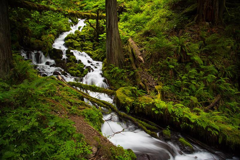 Wahkeena Creek 1