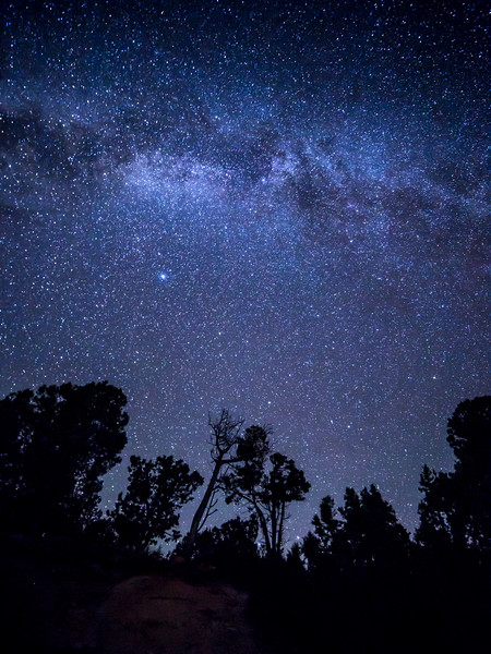 Stars over Trees at Mesa Verde