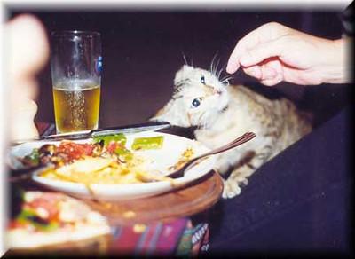 catdinner.jpe