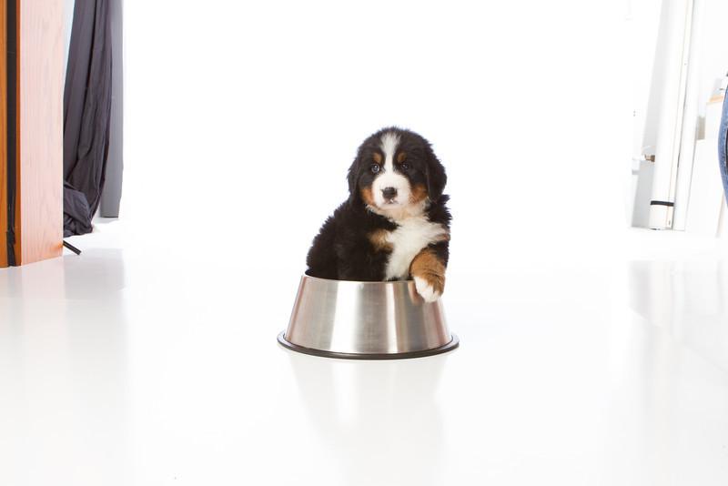 2013-Pearson Pups-Jun02-0334.jpg
