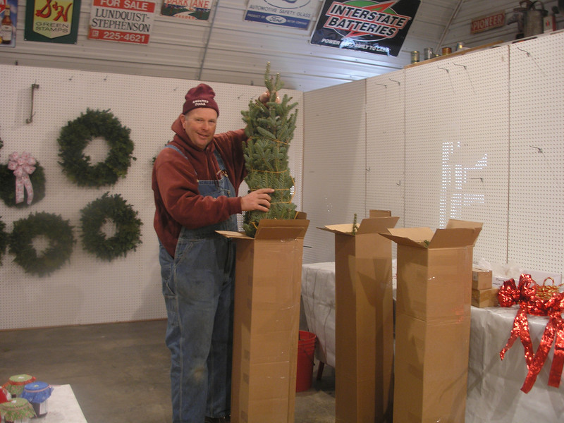 4 foot Fir trees tied to send to the troops