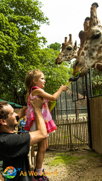 Feeding the Giraffes is one of the best photo opportunities, at $5.00 for several leaves of romaine lettuce, the priceless photos of your granddaughter is worth it.