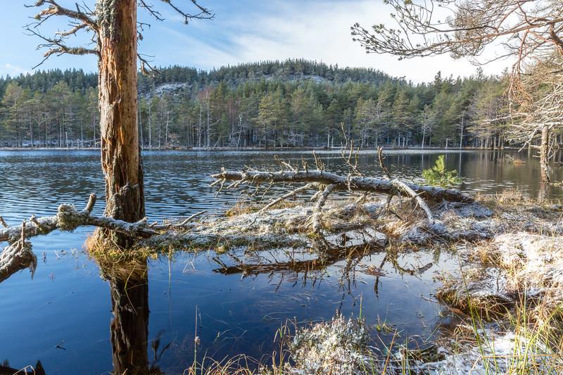 Uath Lochan - Inshriach Forest