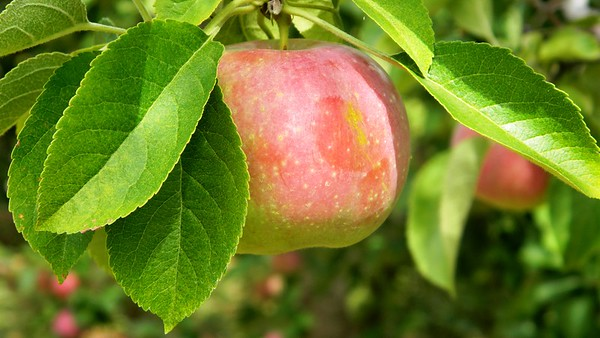 PickYourOwn-NBBR-90219 028