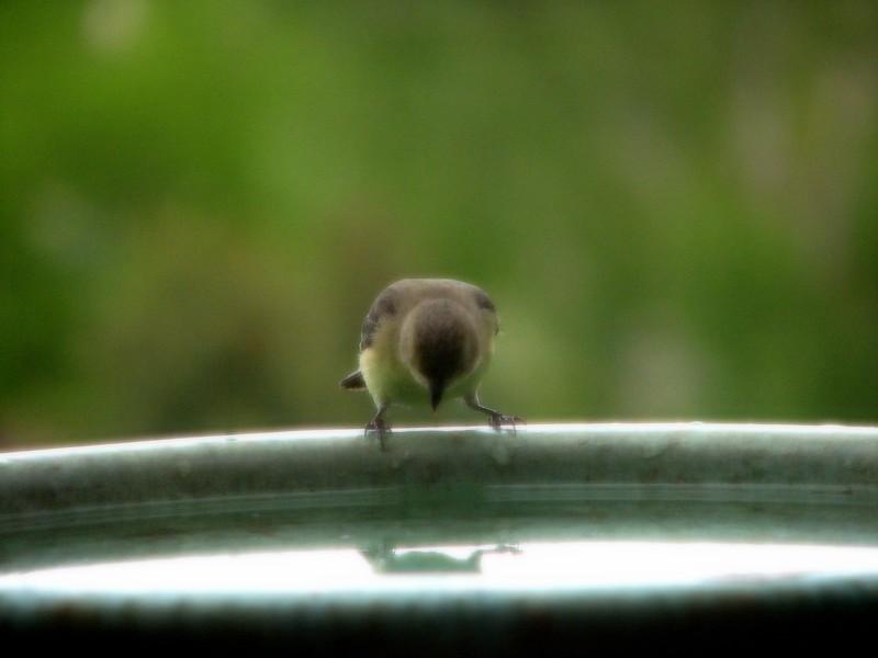birds (164).jpg