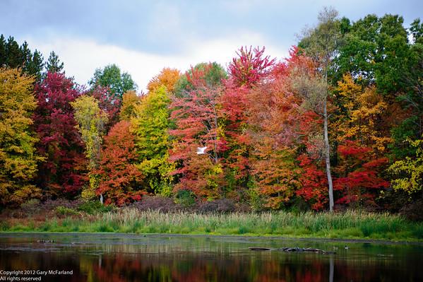 Michigan Fall Colors 2012