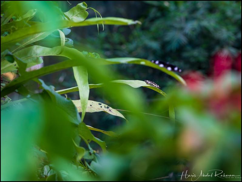 200104 KL Butterfly Park 23.jpg