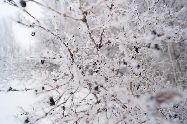 frost in the garden