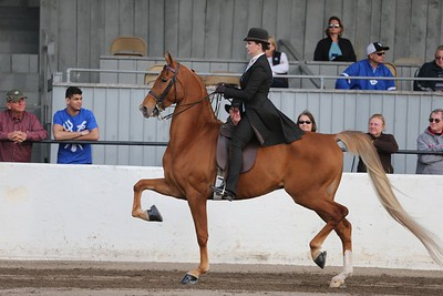 46. Juvenile 3 Gaited Show Pleasure Championship