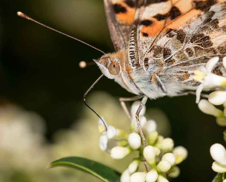 butterfly-7.jpg