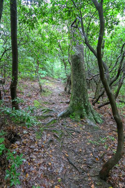 Barnett Branch Trail -- 3,650'