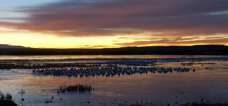 Snow Geese At Sunrise #1 0720757