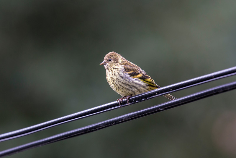 Curious Bird-3878.JPG