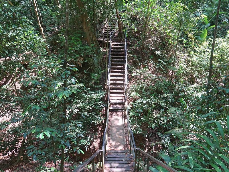 IMG_5210-jungle-stairs.jpg