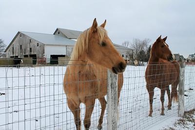 Oswego Horse Farm - 2013