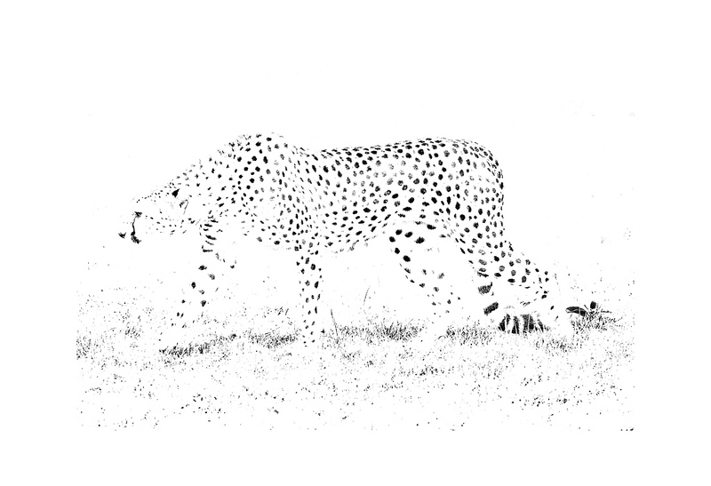 I Spotted a Cheetah (Print).jpg