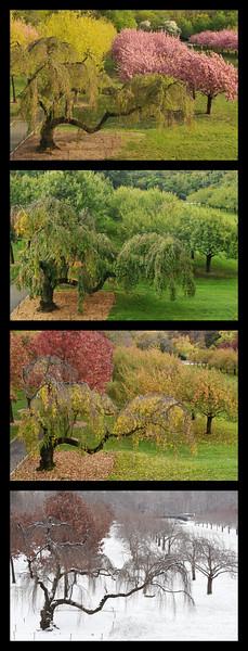 Cherry Esplanade Seasons