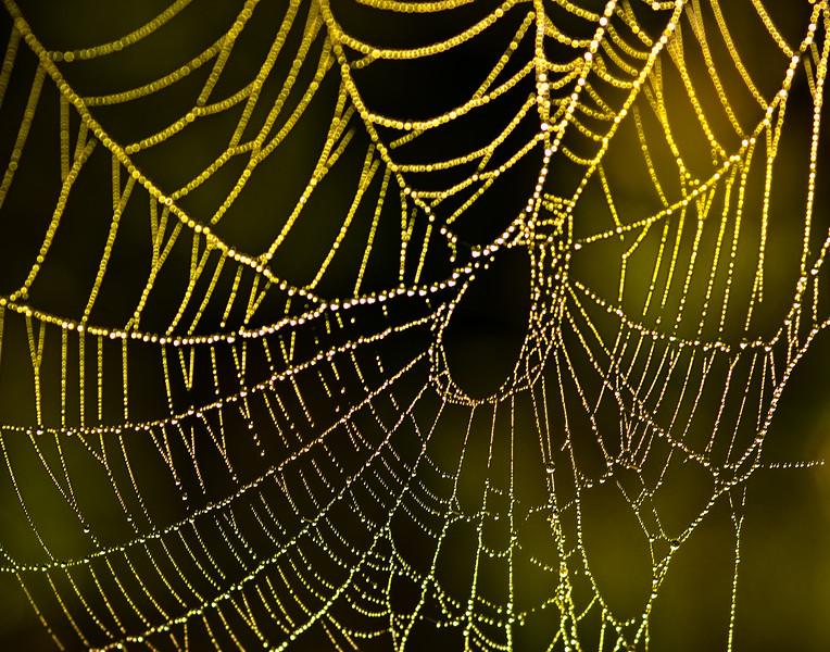 spiderweb_082010-12.jpg
