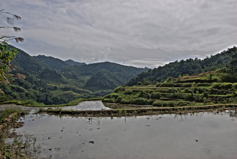 Closer shot of the Banaue Rice Terraces from the banks - Banaue, Philippines