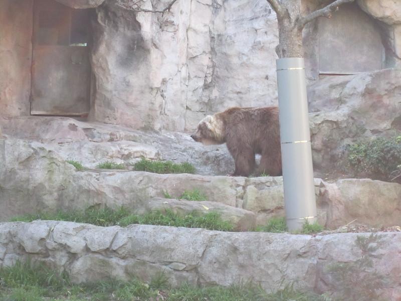 Sydney - Sydeny Zoo-92.JPG