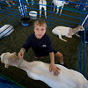 ANIMALS AT THE FAIR