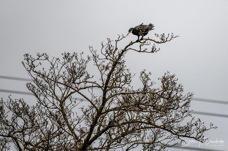 Bedelands Nature Reserve-0819.jpg