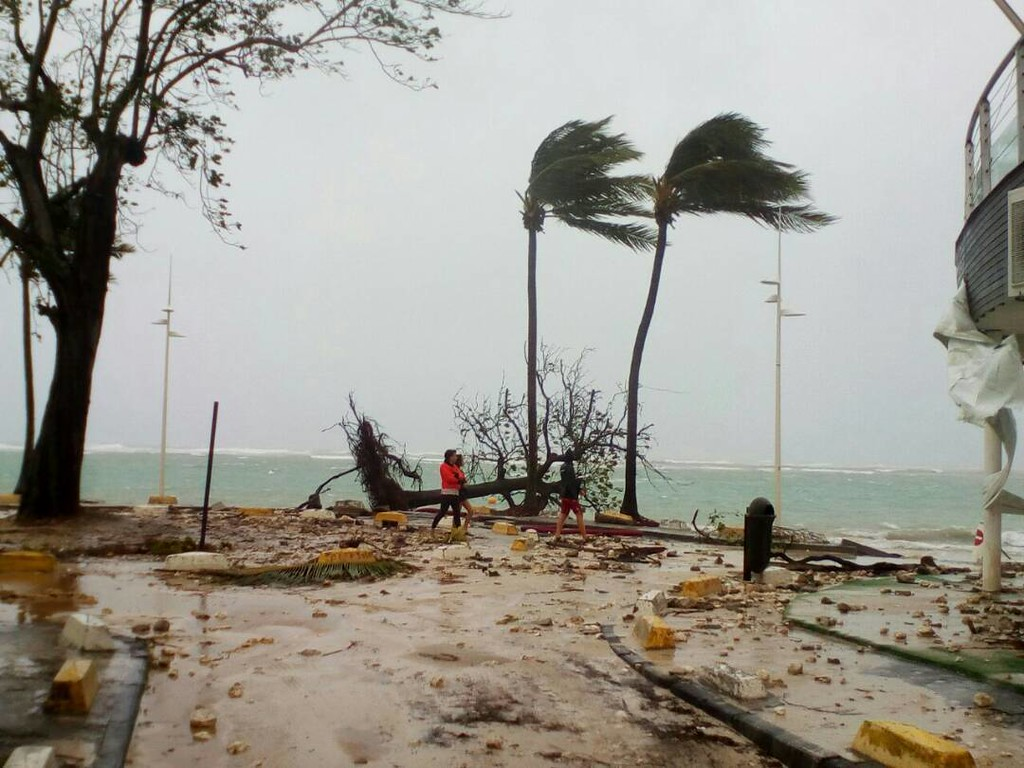 . People walk by a fallen tree off the shore of Sainte-Anne on the French Caribbean island of Guadeloupe, early Tuesday, Sept. 19, 2017, after the passing of Hurricane Maria. (AP Photo/Dominique Chomereau-Lamotte)