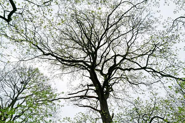 Forêt de Versailles
