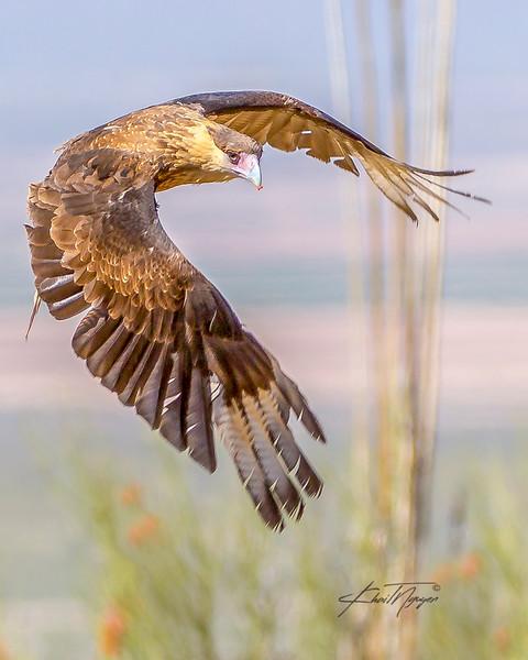 ArizonaBirds