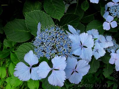 Japan 2006 Flora